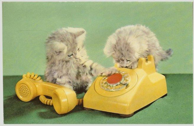 gatos ao telefone