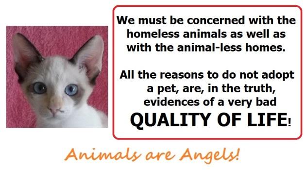 angela-template-animal-less-homes