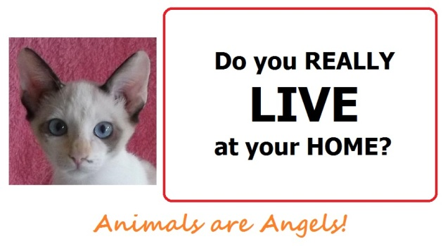 angela-template-do-you-really-live-at-your-home