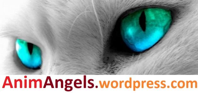 animangels-website-logo-color-1700x800-jpeg