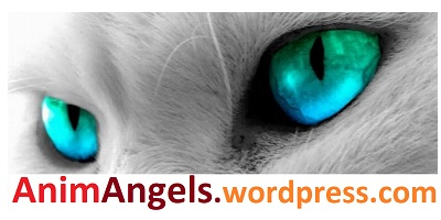 Logo AnimAngels 400 x 200